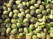 Fresh almonds with hulls