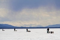 Dog teams with musher, dog sleds, four, frozen Lake Laberge, Yukon Territory, Canada