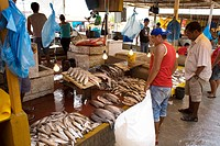 Fresh fish, Porto, Amazônia, Manaus, Amazonas, Brazil