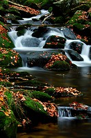 Moss-covered rocks in a mountain stream, Bayerischer Wald Bavarian Forest, Bavaria, Germany, Europe