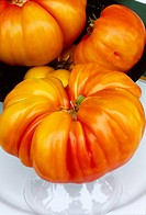 Agriculture _ Closeup of heirloom tomatoes, Pineapple variety / CA _ Monterey Co