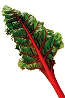 Swiss Chard or Mangold (Beta vulgaris var. cicla)
