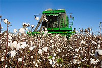 Agriculture _ A six row John Deere picker harvests mature cotton / Mississippi, USA