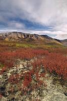 Tombstone Territorial Park, Yukon Territory, Canada