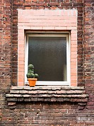 Flowerpot with cactus on an old backyard window in Berlin, Germany, Europe