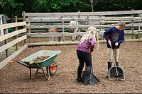 children cleaning paddock