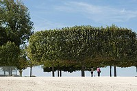 France, Paris, people walking under trees in park