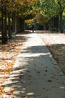 France, Paris, leaves scattered across path in park