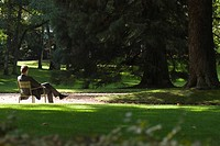 Man sitting alone in park, rear view