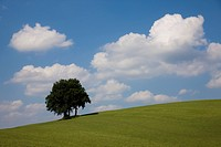 Single tree on a hill, blue sky and white clouds, Starnberg district, Upper Bavaria, Germany, Europe