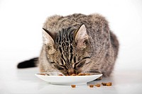 Domestic cat feeding