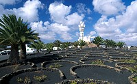 Palm trees in garden with monument in background, Monumento al Campesino, San Bartolome, Lanzarote, Canary Islands, Spain