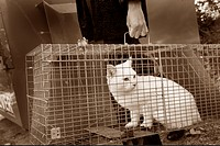 White cat being carried in cage