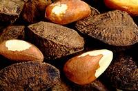 Brazil nut seeds, Bertholletia excelsa, Lecythidaceae, Rio Branco, Acre, Brazil