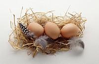 Guinea_fowl eggs