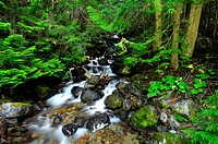 10856609, Canada, Waterfall, Kokanee Creek Provinc