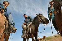 Mongolian horsemen with a herd of two-humped camels, north central Mongolia The two-humped camel is the Bactrian Camel Camelus bactrianus, native to t...