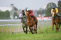 Group of horses racing