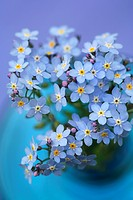 A posy of forget_me_nots in a vase