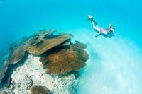 Snorkeler over Corals in Bikini Lagoon, Marshall Islands, Bikini Atoll, Micronesia, Pacific Ocean