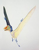 Palaeozoology - Jurassic period - Pterosaurs - Dimorphodon - Art work