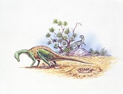 Palaeozoology - Cretaceous period - Dinosaurs - Orodromeus and Troodon - Art work
