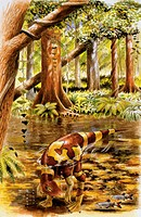 Palaeozoology - Cretaceous period - Dinosaurs - Segnosaurus - Art work