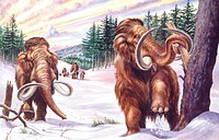 Palaeozoology - Pliocene/Pleistocene period - Extinct mammals - Herd of mammoths (Mammuthus primigenius) - Art work