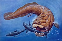 Palaeozoology - Devonian period - Fossil fishes - Placodermi - Dunkleosteus during the predation - Art work