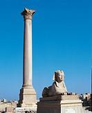 Egypt - Alexandria. Ptolemaic Serapeum. Pompey's Pillar and granite sphinx