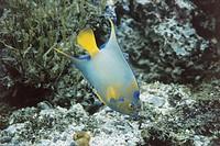 Zoology - Fish - Marine fauna. The Caribbean