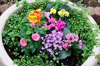 planting pot, flowers,