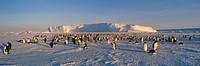 Emperor Penguin Aptenodytes forsteri rookery. Dawson_Lambton Glacier. Weddell Sea. Antarctica.