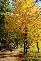 broad_leafed trees, way, jogger, young, autumn, dusk, forest, deciduous forest, forest path, woman, runner, running, jogs, trains, sport, run_sport, e...