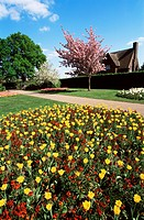 Great Britain, England, London, greenwich park, flower, bed, spring, park, park, plants, trees, lawn, lawns, meadow, flowers, tulips, bloom, tulip_blo...