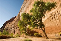 USA, Arizona, Chinle.   Canyon de Chelly National Monument in the Navajo Indian Reserve.  Steep cliffs near the White House Ruins viewed from the cany...