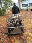 Woman with wheel barrow filled with sticks. Broomes Island, Maryland, USA