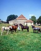 Horses at a typical old Limousin farm
