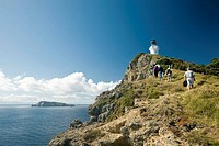 Mokohinau Island hike to lighthouse  Burgess and Great Barrier Islands, North Island, New Zealand  MR