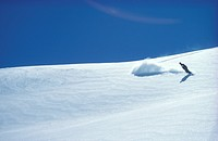 Day, Bernhard, cow, cold, blue, avalanche (thumbnail)