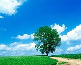 Tree and blue sky (thumbnail)