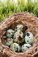 Still life of speckled eggs in nest