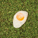 Fried egg in grass