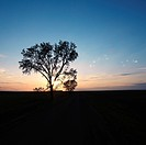 Silhouette of lone tree at sunset in rural field