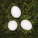 Studio shot of three white eggs laying in grass