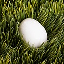 A white egg buried in grass