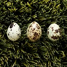 Speckled eggs on grass