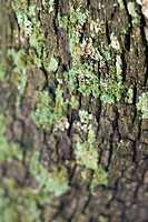 Close_up of moss growing on tree bark