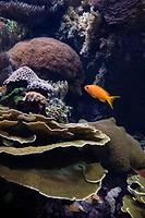 Fish swimming around coral in aquarium in Lisbon, Spain