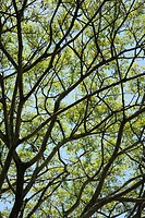 Close_up of tree branches with green leaves and blue sky
